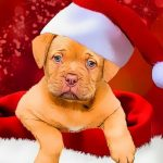 Jeu Christmas Dogs Styles